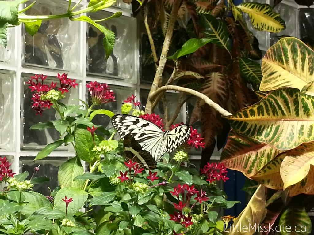 niagara butterly conservatory review - things to do in the rain in niagara falls