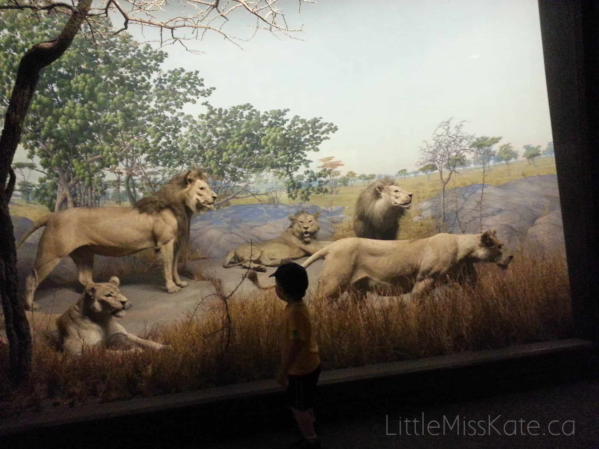 academy of natural science dioramas