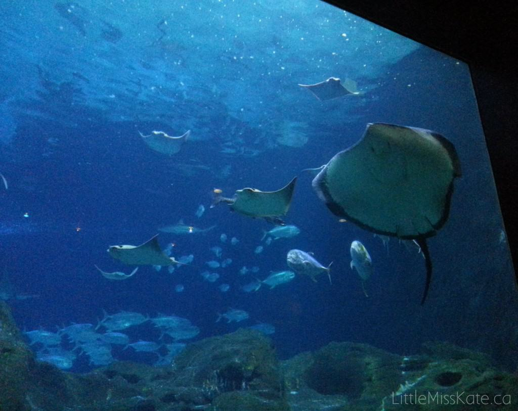 View The Underwater World Like Never Before At Adventure