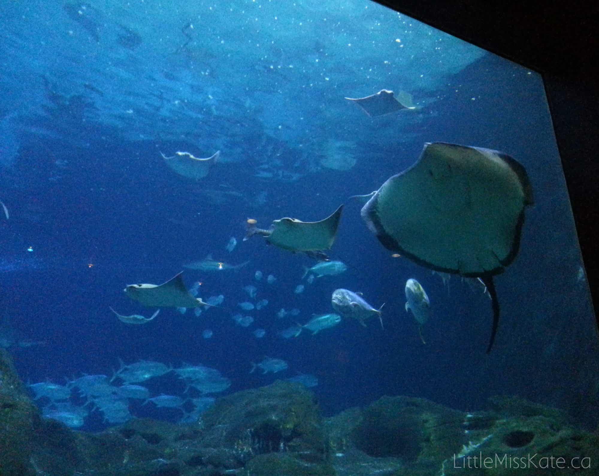 Adeventure Aquarium philadelphia 1