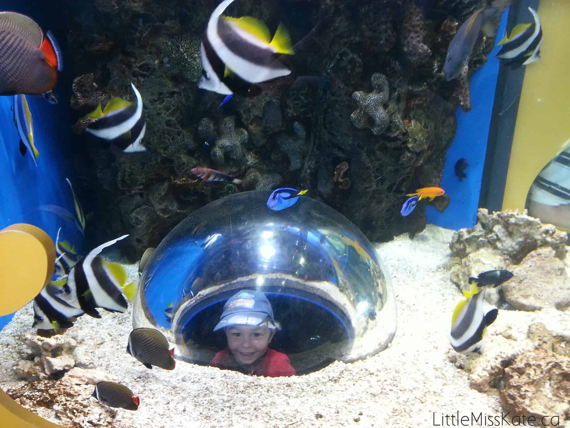 View the Underwater World Like Never Before at Adventure Aquarium - Little Miss Kate