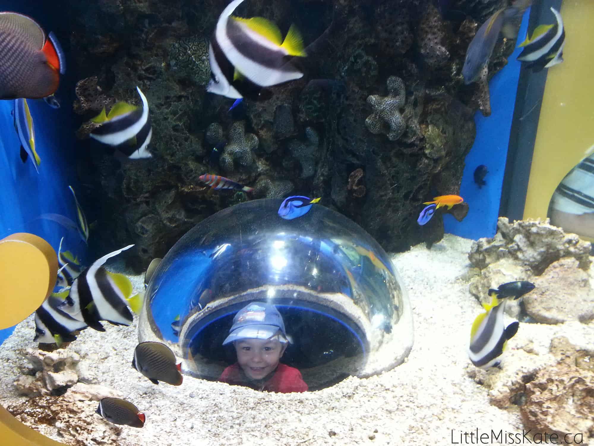 Adeventure Aquarium philadelphia 3