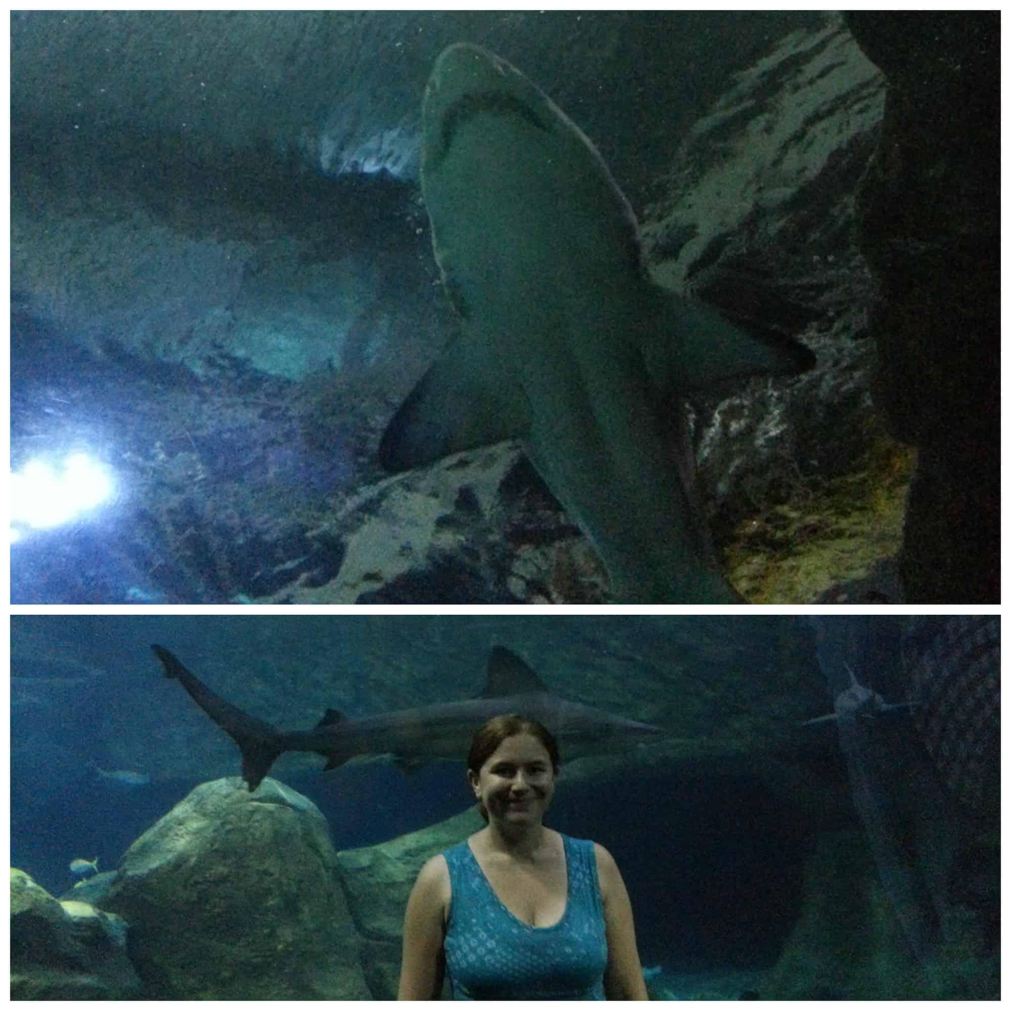 Adeventure Aquarium philadelphia 8
