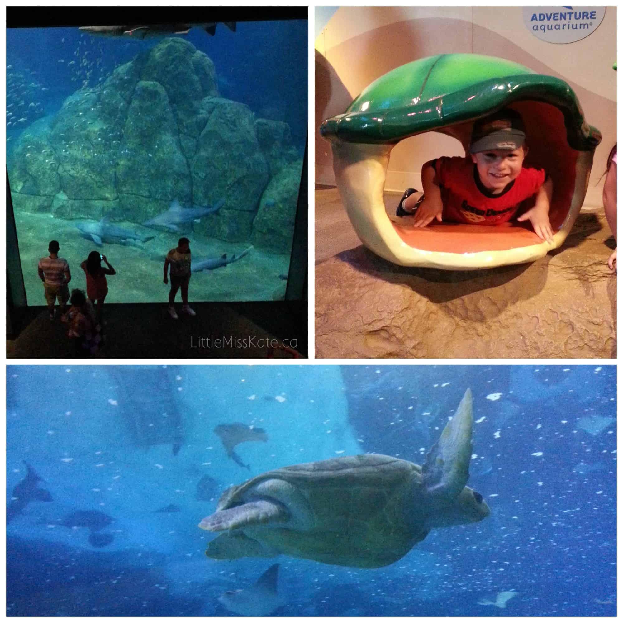 Adeventure Aquarium philadelphia 9