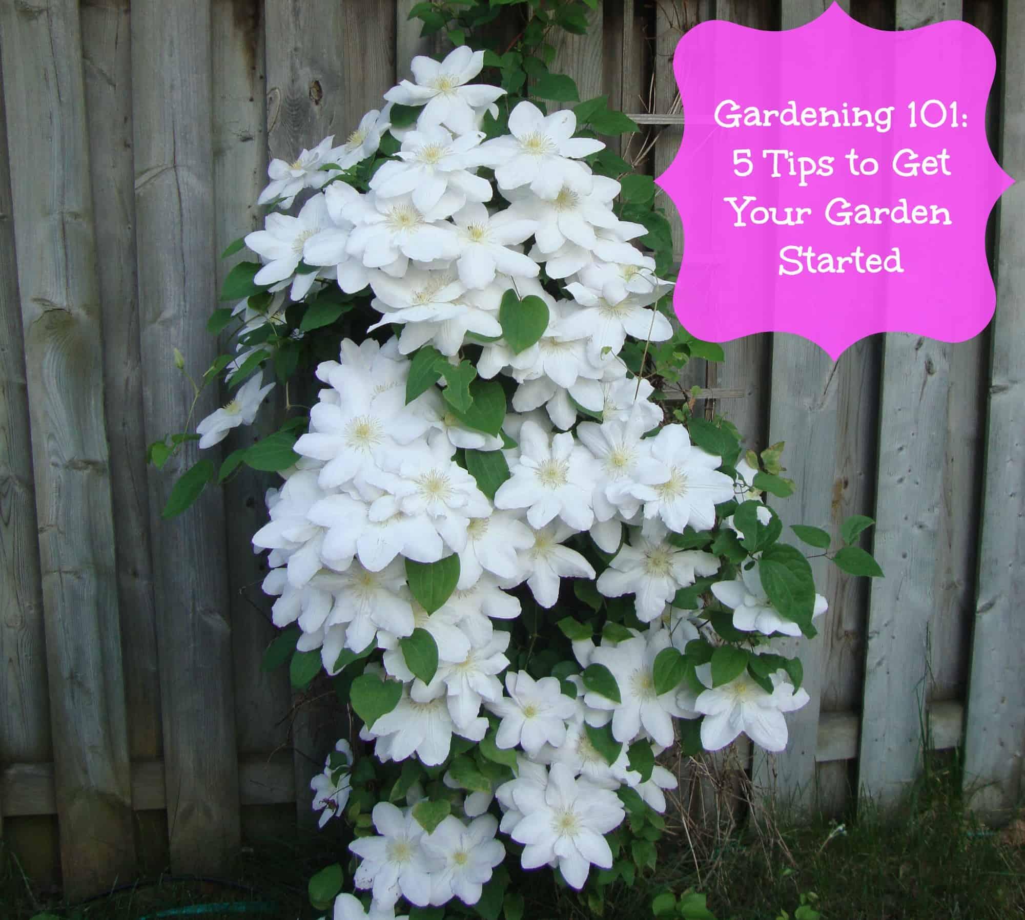 Gardening 101 tips