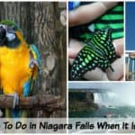 10 Things To Do In Niagara Falls When It Is Raining