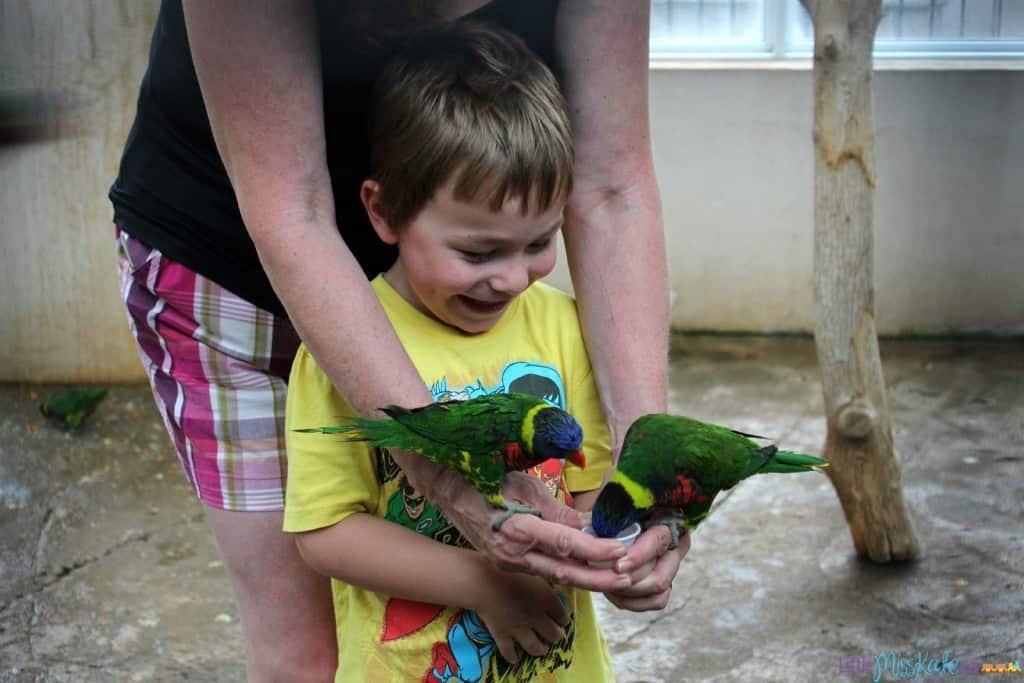 bird kingdom niagara falls feed the birds review