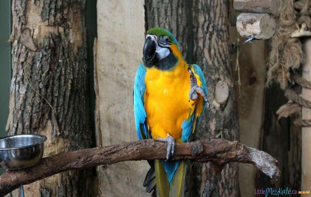 bird kingdom review niagara falls