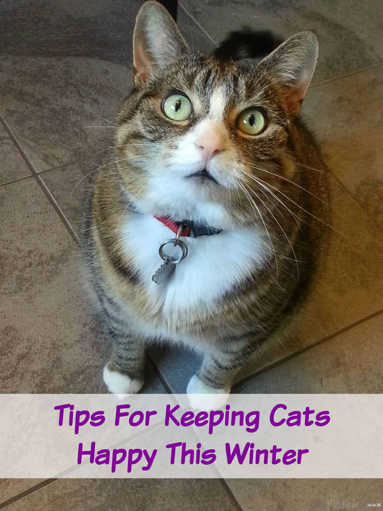 tips for keeping cats happy this winter